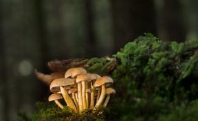 В Роспотребнадзоре рассказали кузбассовцам, как не отравиться грибами