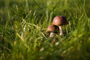 Власти Кузбасса рассказали о новых правилах сбора грибов и берёзового сока