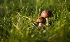 Кузбассовцам объяснили, как не отравиться грибами